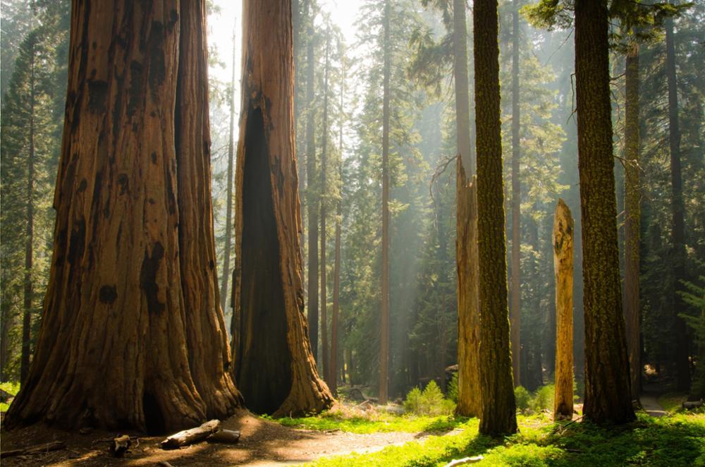 Le top 10 des parcs nationaux à visiter aux Etats-Unis